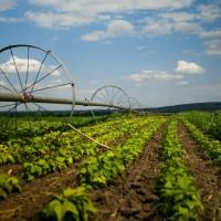 Как применять коды ОКВЭД для сельского хозяйства?