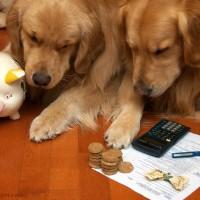 Налог на животных уже не за горами