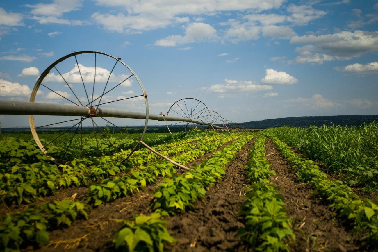 ОКВЭД сельское хозяйство, расшифровка