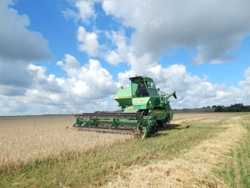 ОКВЭД сельского хозяйства