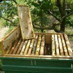 Улей-лежак предпочитают начинающие пчеловоды, поскольку он отличается простотой в уходе