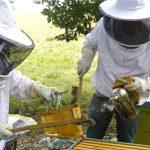 Защитный костюм пчеловода состоит из шляпы с полями и прикреплённой сеткой из тюли, перчаток и закрытой обуви